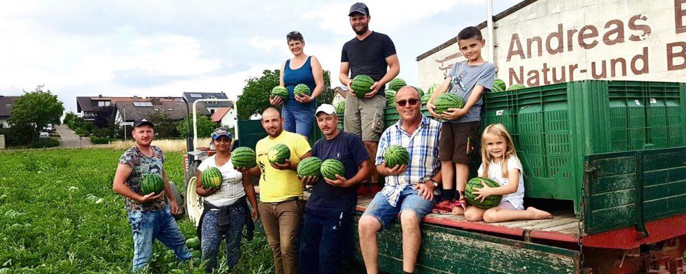 Melonen aus der Regio